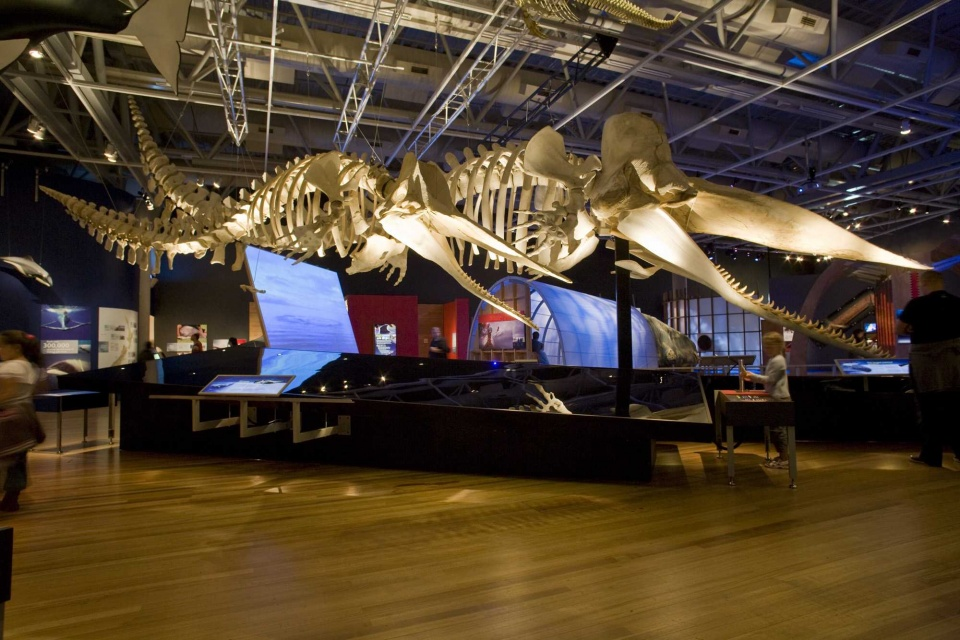 Natural History Museum New Zealand