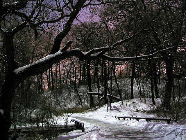Quite Winter Night by Paul Bica