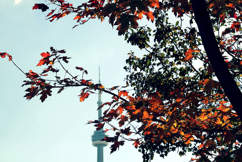 CN Tower against autumn leaves