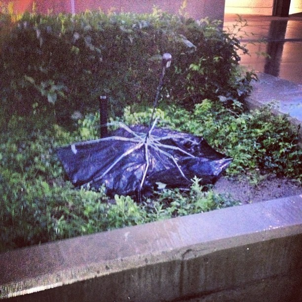 There Were a lot of Umbrella Funerals by Jenn Horrocks